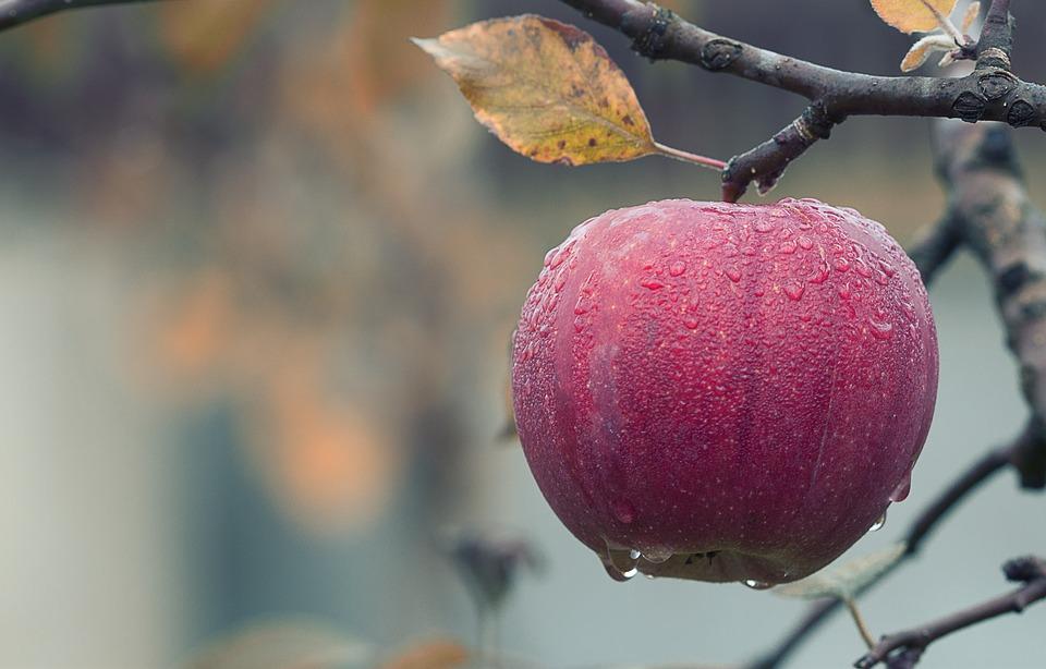 DOMAĆINSKA KUĆA: Koliko je jabuci i šljivi potrebno vode
