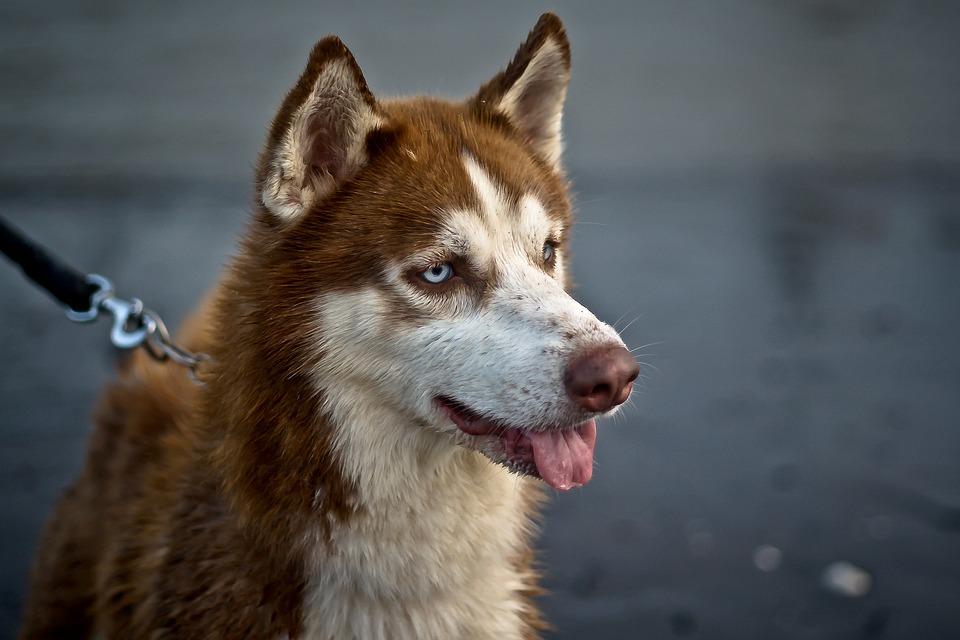Porez na pse povećao bi i broj lutalica