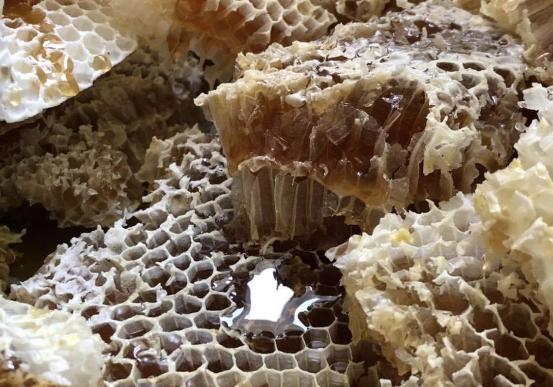Saće, med, foto: M. Miladinović