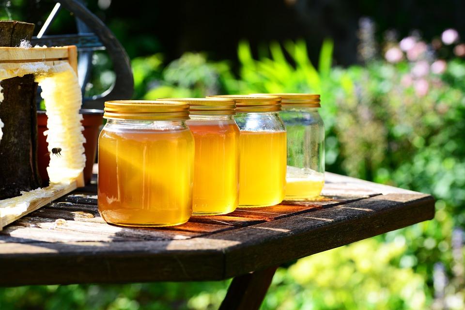 Srbija ima najveći broj košnica po glavi stanovnika na svetu! U Knjaževcu se razvija pčelarstvo