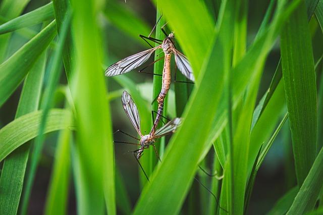 Komarci, ilustracija, foto: Lutz Peter, preuzeto: Pixabay.com