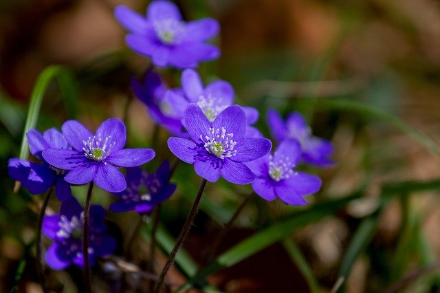 Šumsko bilje i cveće