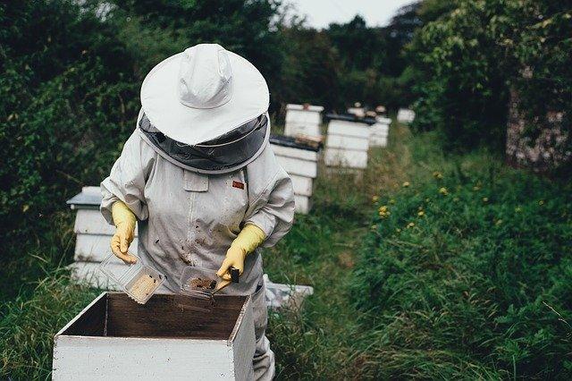 Pčelar, ilustracija, pixabay