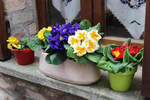 Cveće, proleće, foto: Dirceu Dominguez, pixabay