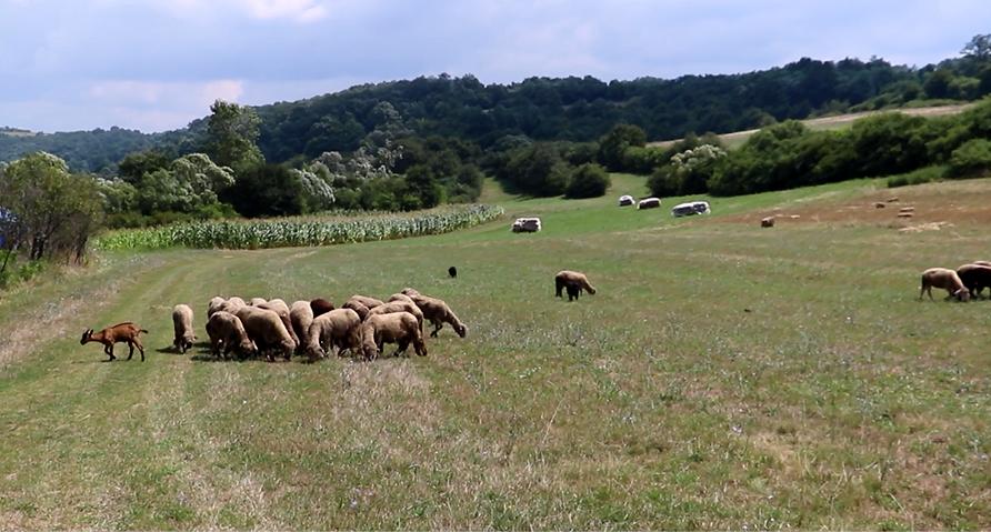 Poljoprivreda, stočarstvo, foto: Knjaževačke novine, autor: M.M.
