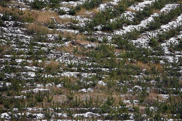 Pošumljavanje, borovi, foto: Artur Pawlak, pixabay