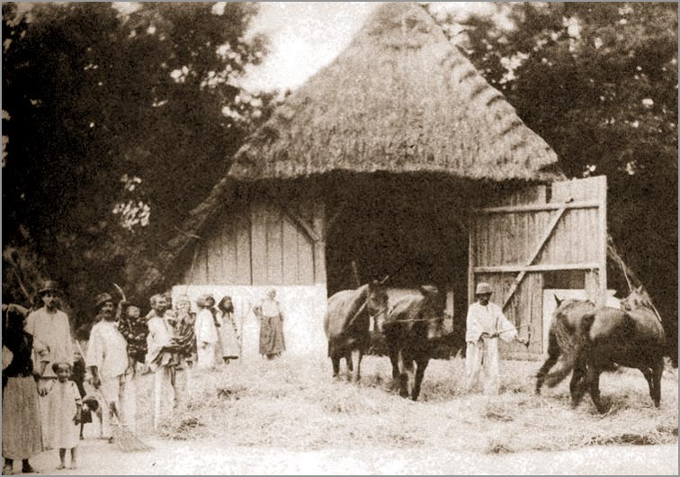 Vršidba konjima krajem 19. i početkom 20. veka, foto: ravnoplov.rs  / M.S.