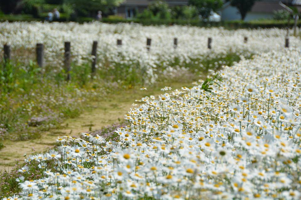 Priroda, proleće, Lepo vreme, foto: pixabay