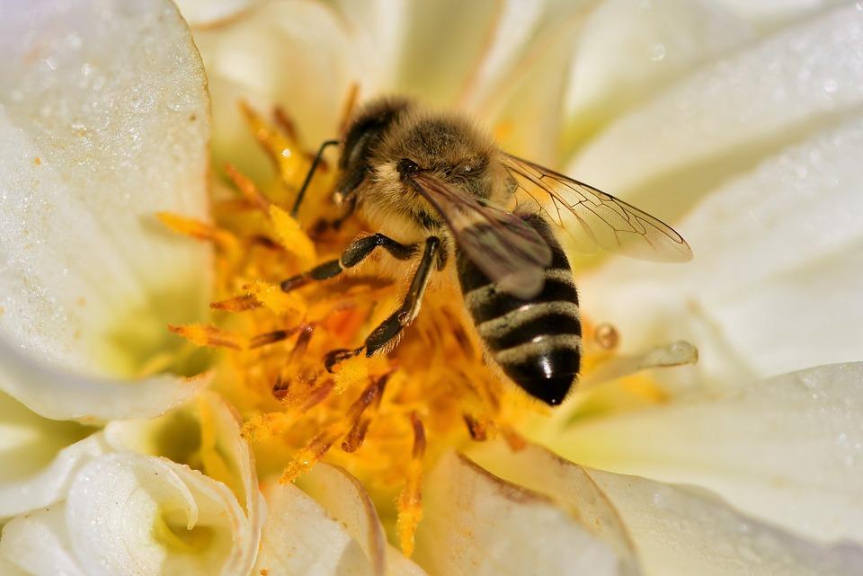Foto ilustracija, pčela, pixabay.com