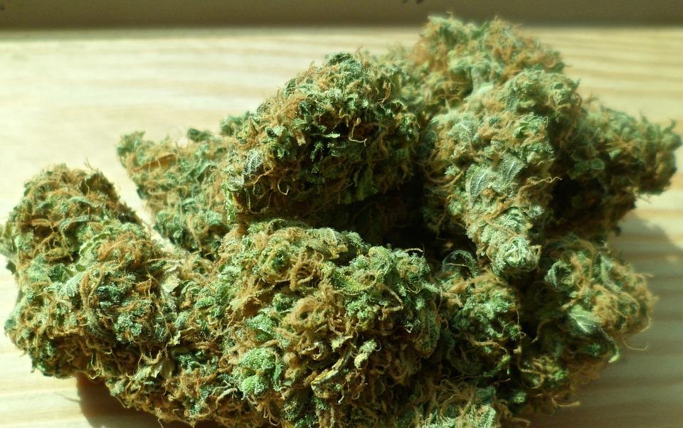 Marihuana, foto: Chuck Herrera, foto: pixabay