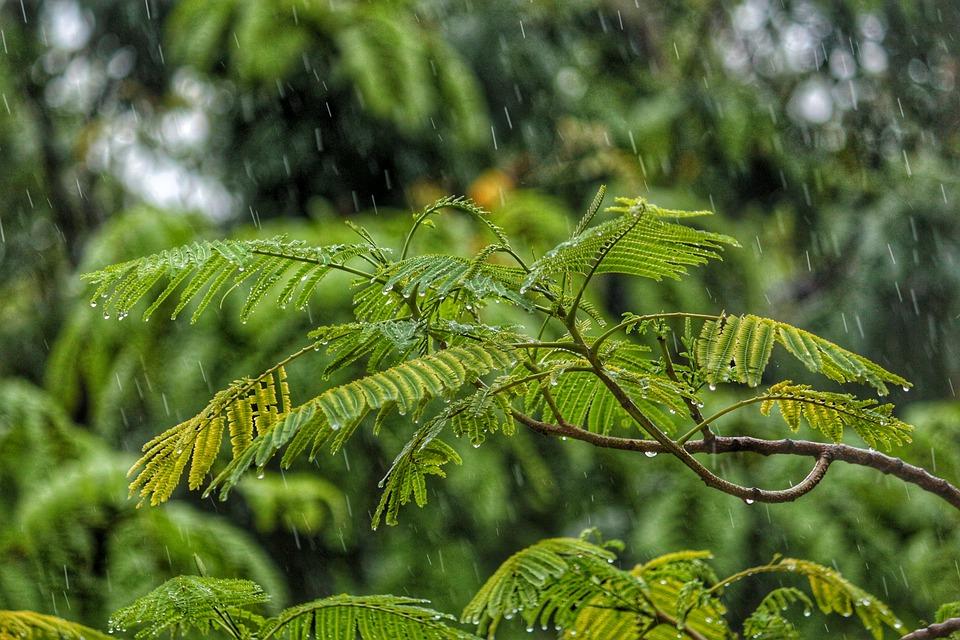Kišovito, foto: Pixabay.com / ilustracija